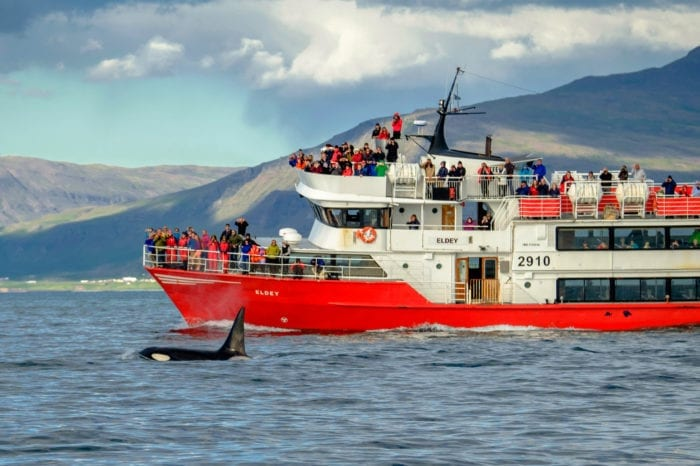 Whale Watching From Reykjavík – Classic Tour
